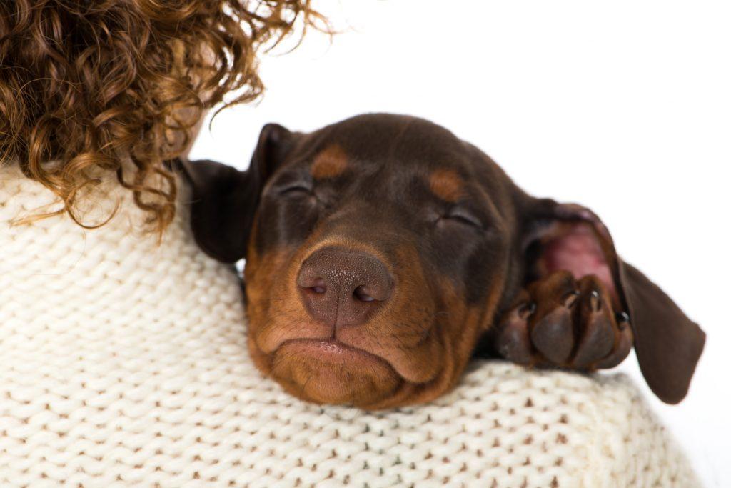 Dlaczego Pies Gryzie Buty Blog Sklepu Apetete