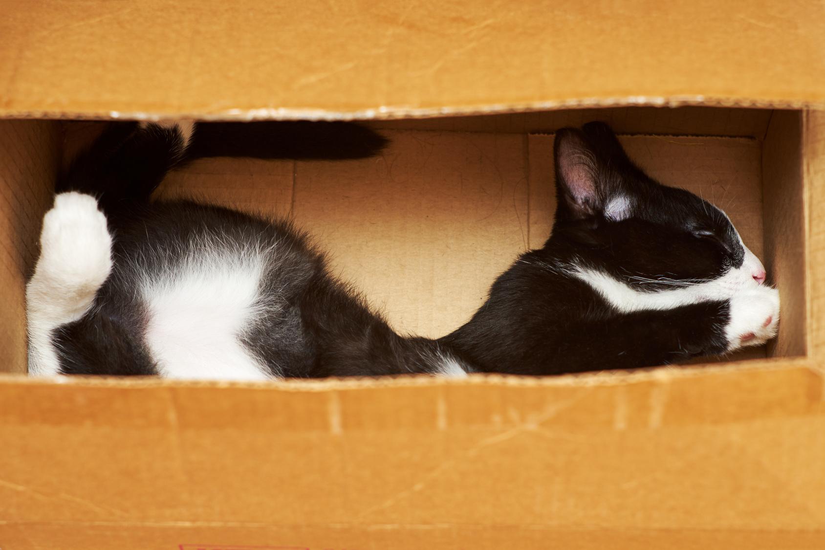kot chowa się w pudełku