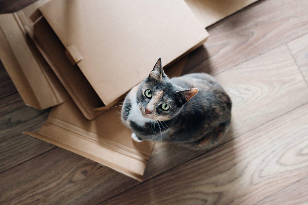 Co Zrobić Kiedy Kot Załatwia Się Poza Kuwetą Blog Sklepu