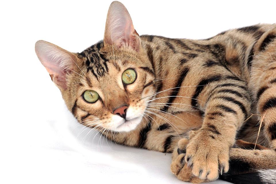 Kot Dla Alergika Sklep Zoologiczny Z Akcesoriami I Artykułami Dla