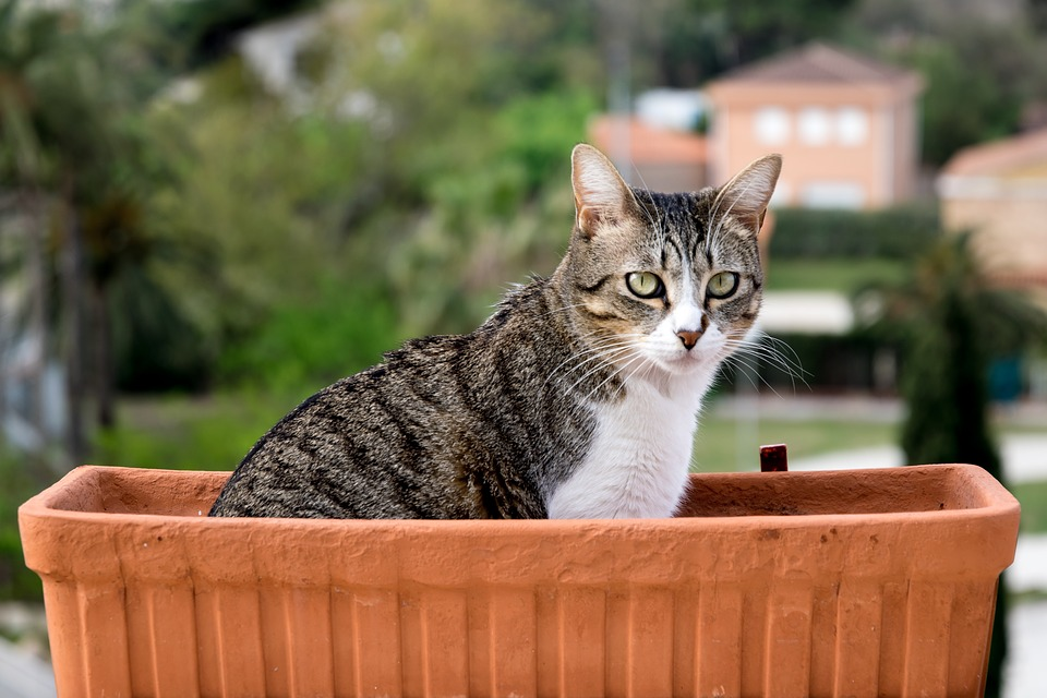 Kot Nie Sika Do Kuwety Blog Sklepu Apetete