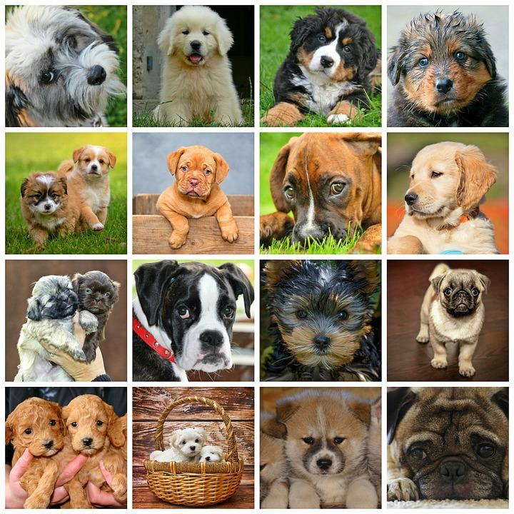 Wspaniały Jakie rasy psów mają włosy zamiast sierści | Sklep zoologiczny z BA68