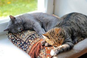 Kot Rosyjski i inne zwierzęta