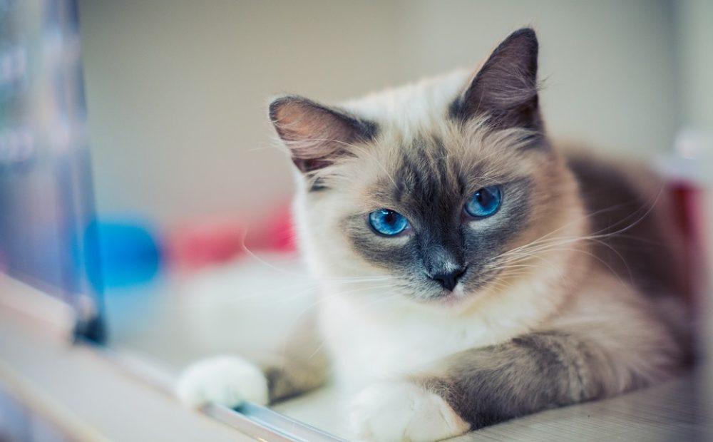 kitty-2602118_960_720