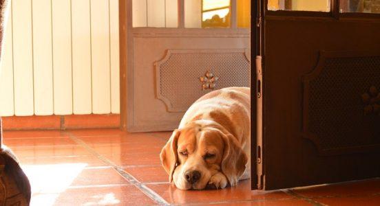 samotność psa