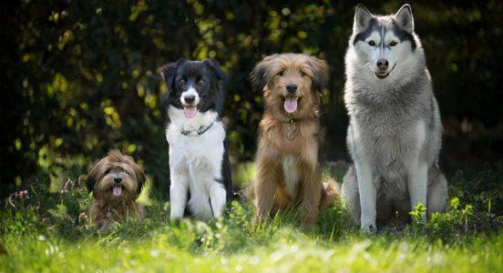 Jak prawidłowo dbać o sierść psa