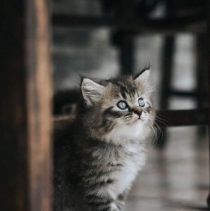 20 powodów dla których warto mieć kota (1)
