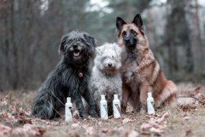 test szamponów przez 3 różne psy
