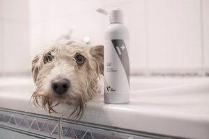 szampon dla psów o białej sierści