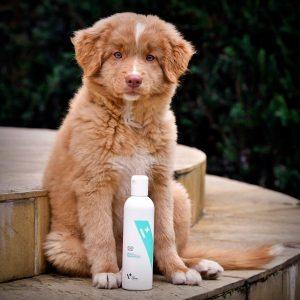 Toller test szamponów Vet Expert