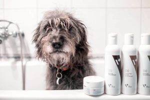 szampon dla psa - pies w kąpieli
