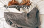 Antykoncepcja chirurgiczna, czyli kastracja –sterylizacja kotów i psów.