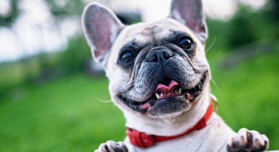 Ciekawostki o rasach psów i kotów