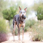 Zabawki dla psa - zapewnienie prawidłowego rozwoju czworonoga