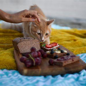 Dieta bezmięsna u kota? Dieta wegetariańska u kota, czy to w ogóle możliwe?
