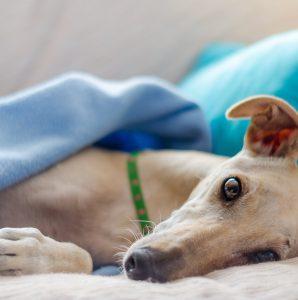 Jakie choroby skóry pies może nam sygnalizować drapaniem?