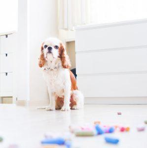 Jakie i witaminy dla psa i szczeniaka wybrać jak je stosować?