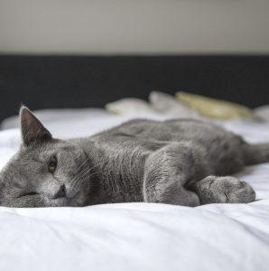 Osowiały apatyczny kot – co może oznaczać takie zachowanie?