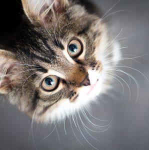 czy koty reagują na imię