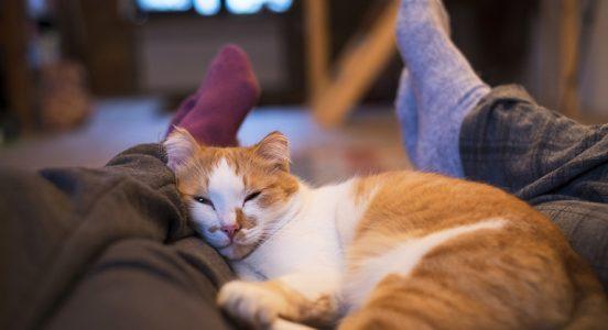 czy koty wyczuwają choroby