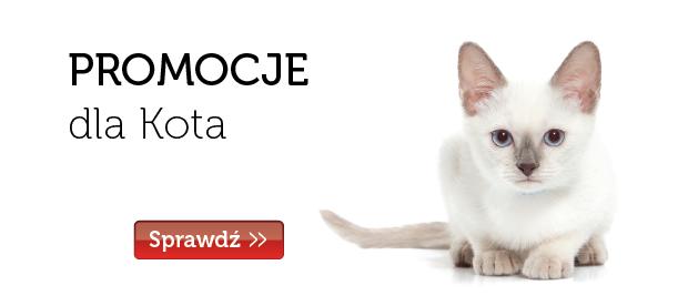 Promocje Kot