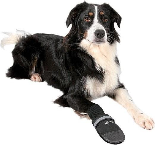 Trixie Walker Buty Ochronne dla psa [rozmiar XXL]