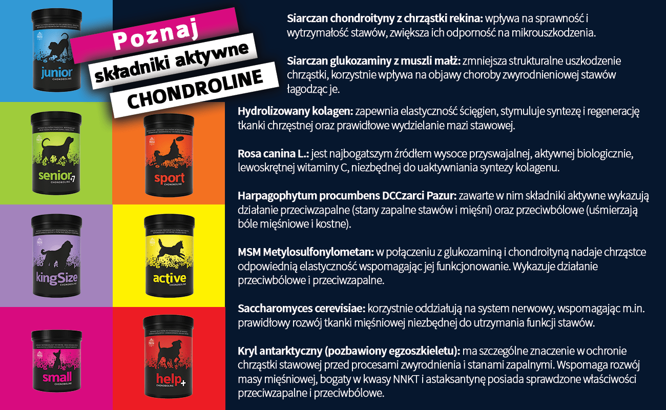 Pokusa Chondroline Active 350g