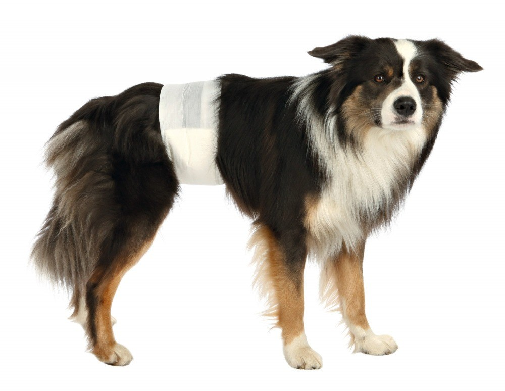 Trixie Pieluchy dla psów rozmiar S-M 12szt.