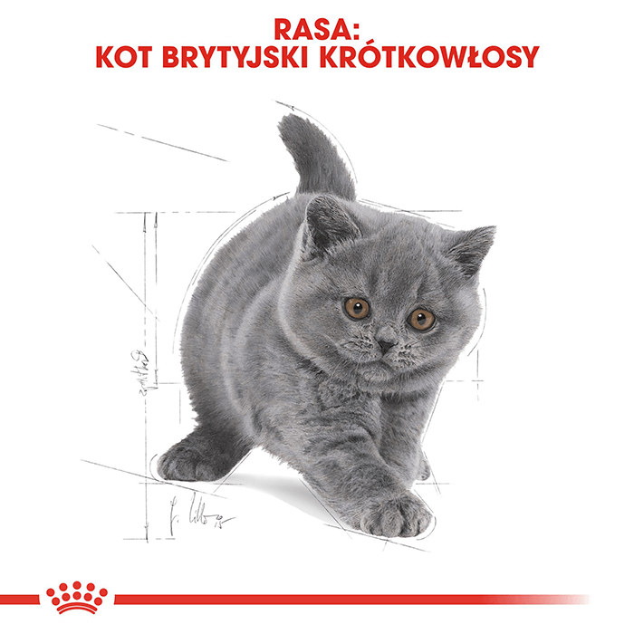 Royal Canin Kitten British Shorthair 34 2kg