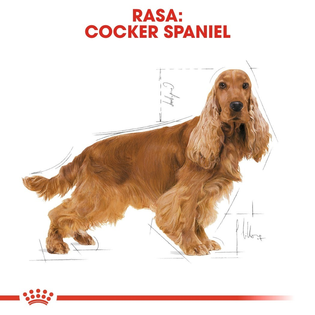 Royal Canin Adult Cocker