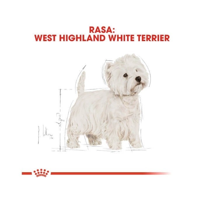 Royal Canin Adult West Highland White Terrier