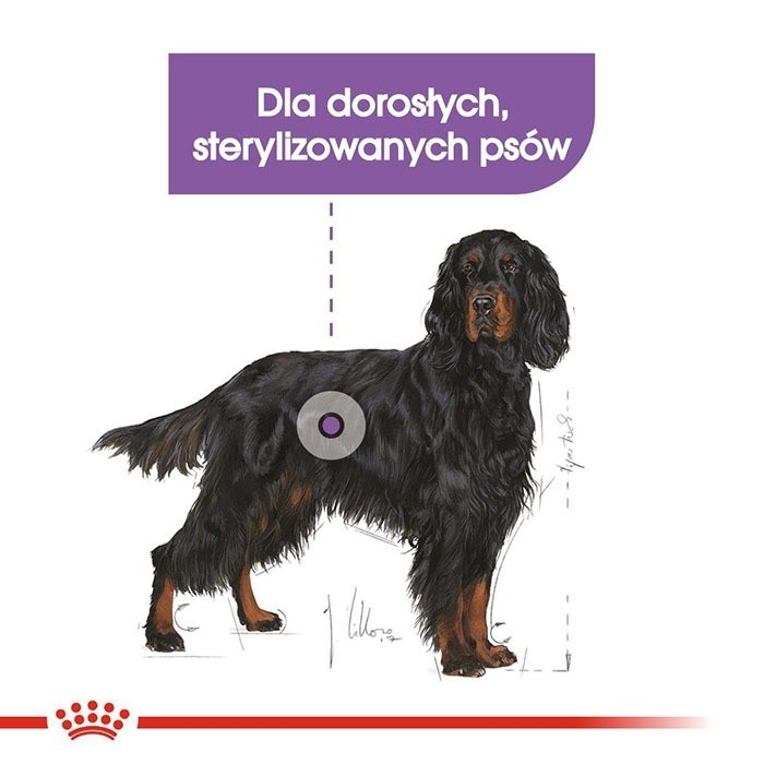 Royal Canin Maxi Sterilised Adult CCN