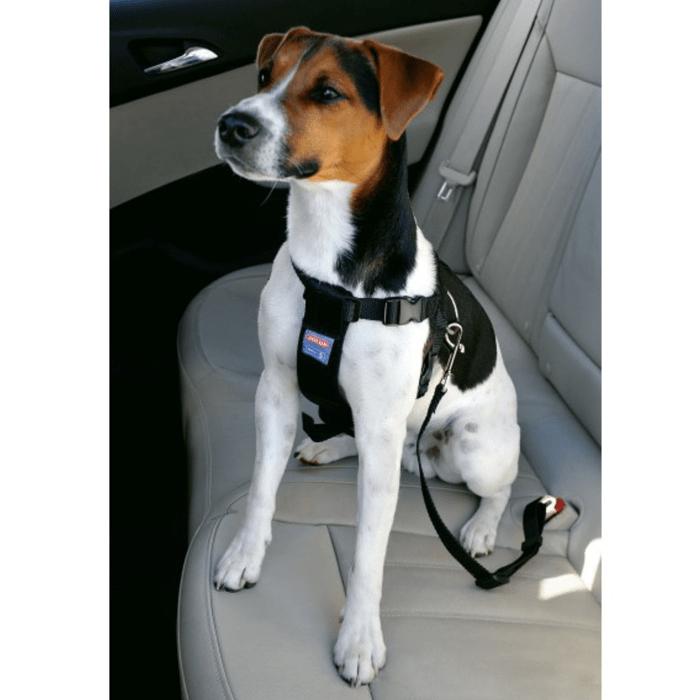 Zolux Smycz do samochodu dla psów
