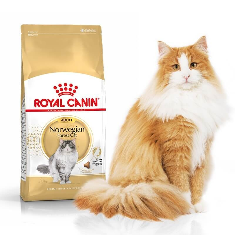 Karmy suche dla kota - Royal Canin Norwegian Forest Cat Adult