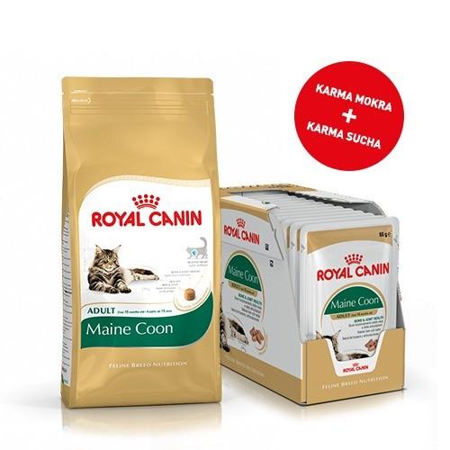 Karmy suche dla kota - Pakiet Royal Canin Maine Coon 31 2kg + 12szt. saszetek