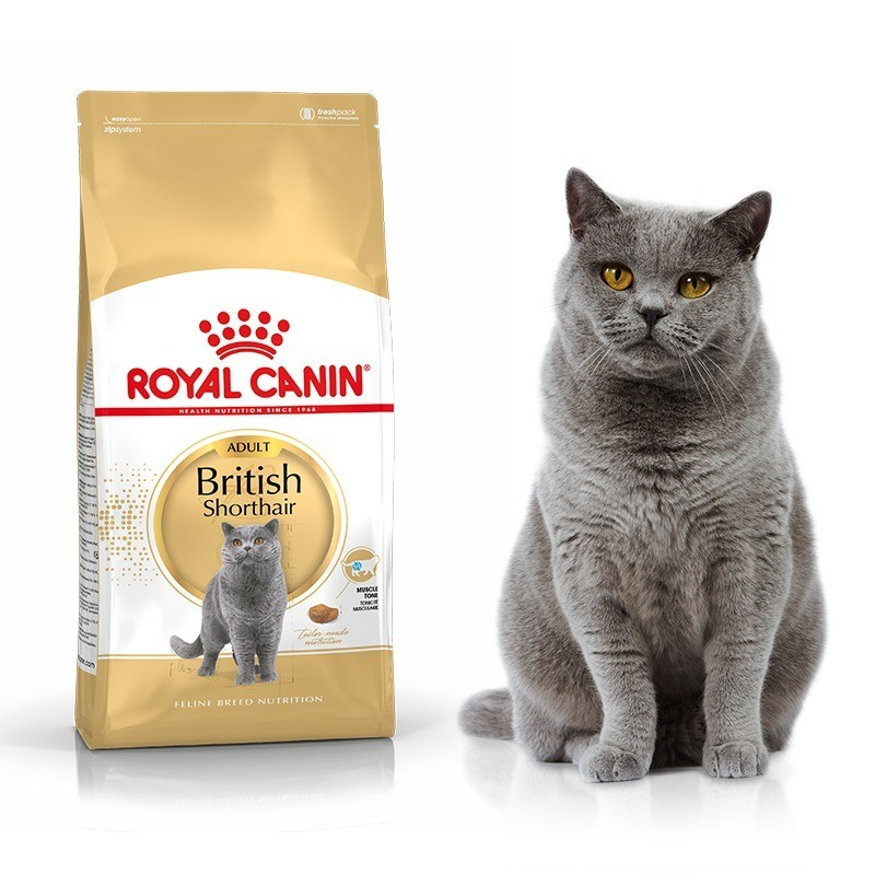 Karmy suche dla kota - Royal Canin British Shorthair 34