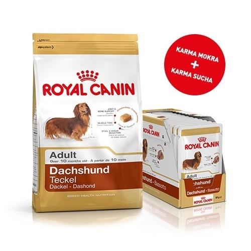Karmy suche dla psa - Pakiet Royal Canin Dachshund Adult 1,5kg + 12szt. saszetek