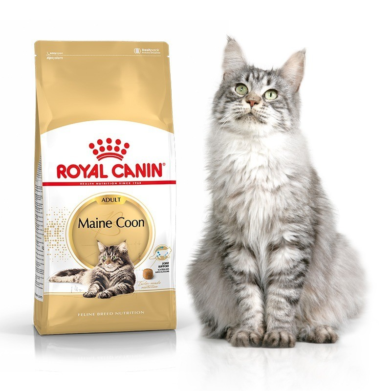 Karmy suche dla kota - Royal Canin Maine Coon 31