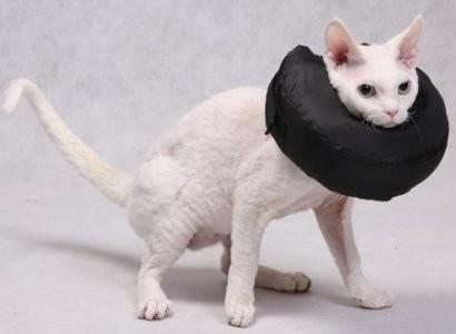 Preparaty lecznicze - Grande Finale Kołnierz pooperacyjny dla kota, psa rozmiar 1