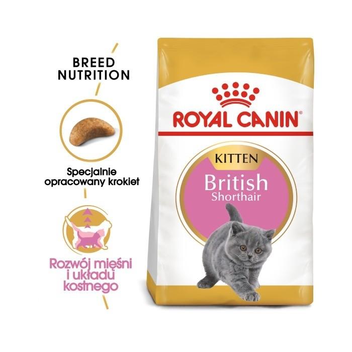 Karmy suche dla kota - Royal Canin Kitten British Shorthair