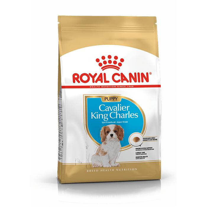 Karmy suche dla psa - Royal Canin Puppy Cavalier King Charles 1,5kg
