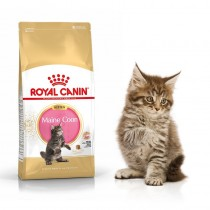Royal Canin Maine Coon Kitten 36