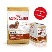 Pakiet Royal Canin Dachshund Adult 1,5kg + 12szt. saszetek